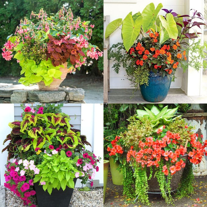 Showy, colorful and easy care shade plants and container gardens with vibrant foliage and flowers. 30+ designer plant lists to create gorgeous gardens with shade loving plants ! - A Piece Of Rainbow