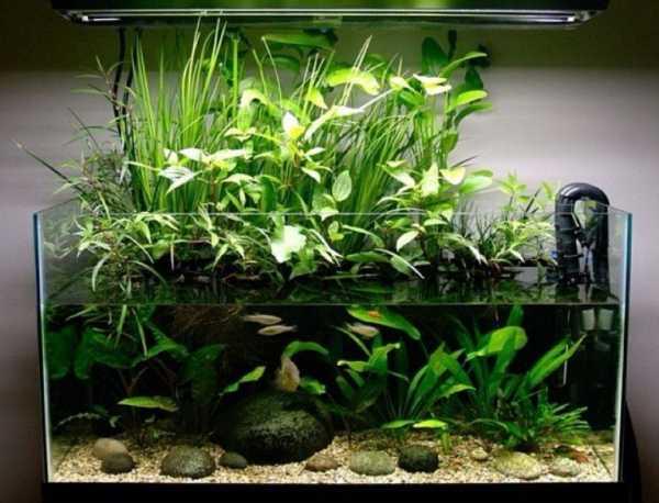полив цветов аквариумной водой